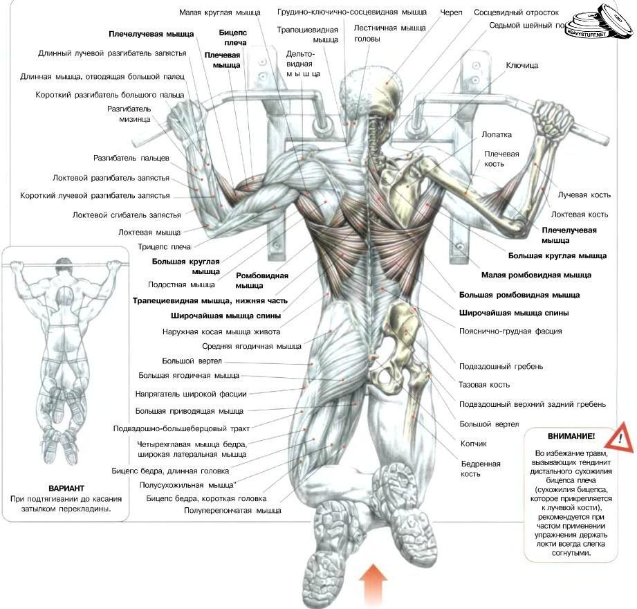 Виды подтягиваний на турнике и их воздействия на определенные группы мышц | Упражнения для отдельных групп мышц - бодибилдинг, культуризм - Качая железО